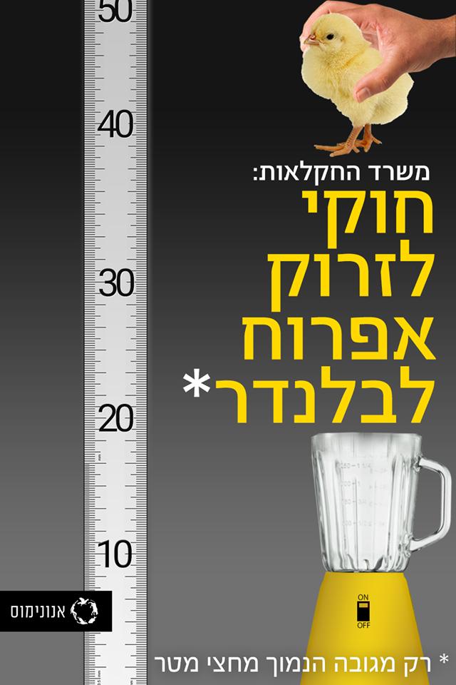 משרד החקלאות: חוקי לזרוק אפרוח לבלנדר - רק מגובה הנמוך מחצי מטר