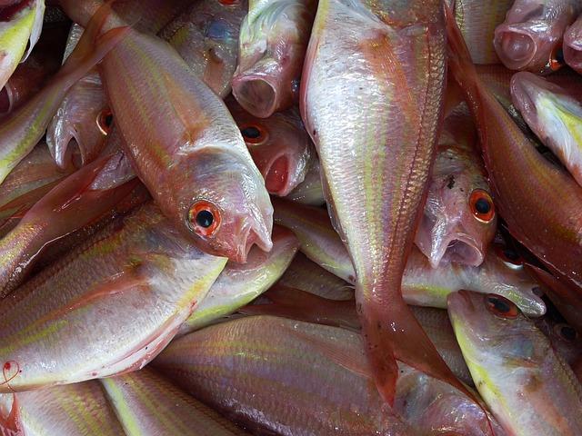 מגיפה במפרץ אילת - בגלל כלובי דגים