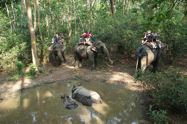 לונלי פלאנט מתנגד לרכיבה על פילים