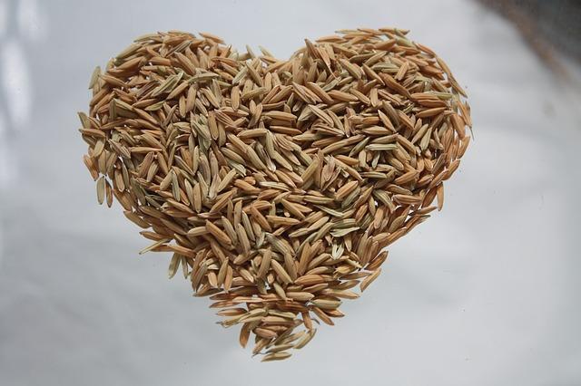 חלבון אורז: הדבר החם הבא