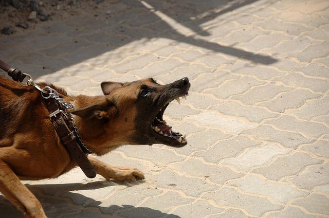 פסיקה: ניתן לשלוח כלב שנשך להסגר בית