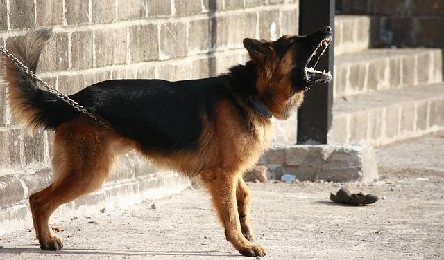 פסיקה: על זוג לכרות לכלביו הרועשים את מיתרי הקול