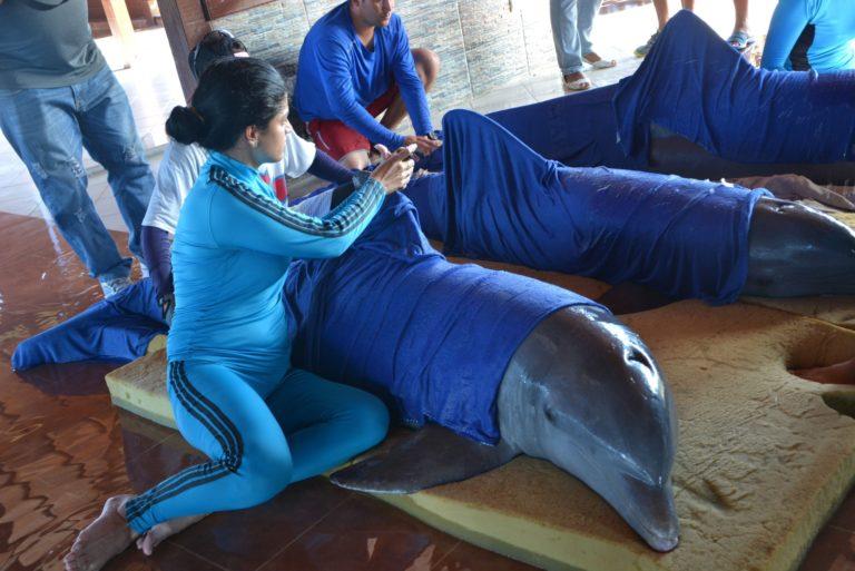 קובה: שישה דולפינים הוטסו למקום בטוח מפני ההוריקן אירמה