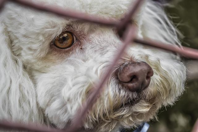 אירמה: כחמישים בעלי חיים ננטשו רגע לפני הגעת הסופה