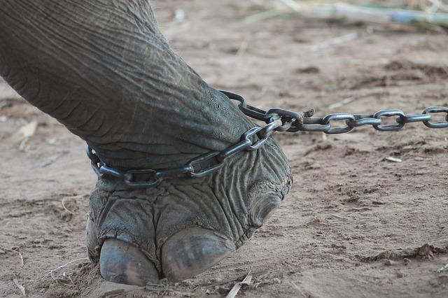 מדינת ניו יורק אוסרת על ניצול פילים בקרקסים