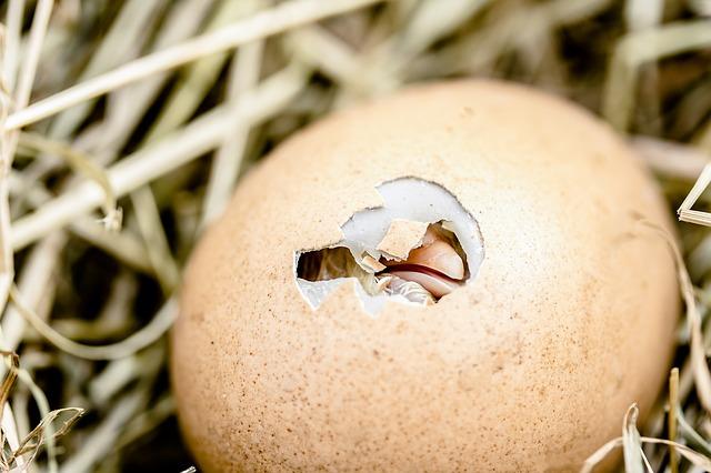 חברת ביצים הפסידה 74 מיליון דולר לטובת חלופות טבעוניות