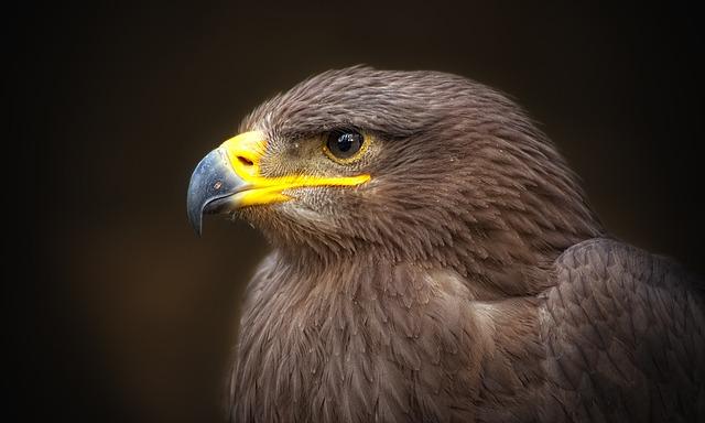 65 מיני עופות בישראל נמצאים בסכנת הכחדה