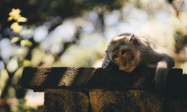 שאטרסטוק אוסרת על פרסום תמונות של קופים בתנאים לא טבעיים