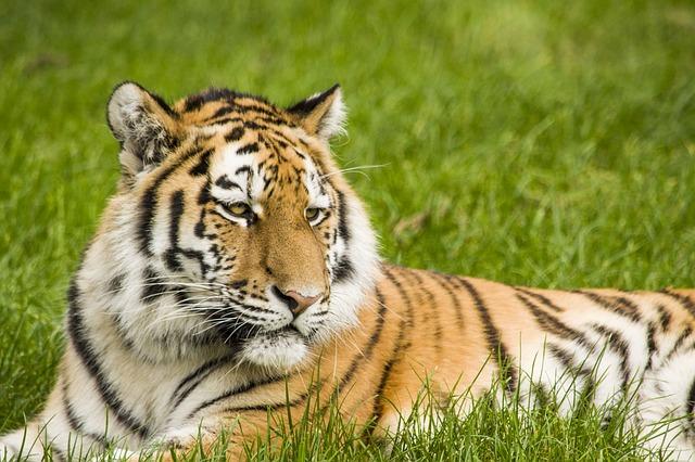 סקוטלנד אוסרת על ניצול חיות בר בקרקסים נודדים