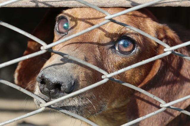 משרד החקלאות הקצה שני מיליון שקלים להפחתת עלות האימוץ של כלב בחצי