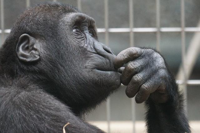 מחקר: בעלי חיים מסויימים יודעים לספור לא פחות טוב מבני אדם