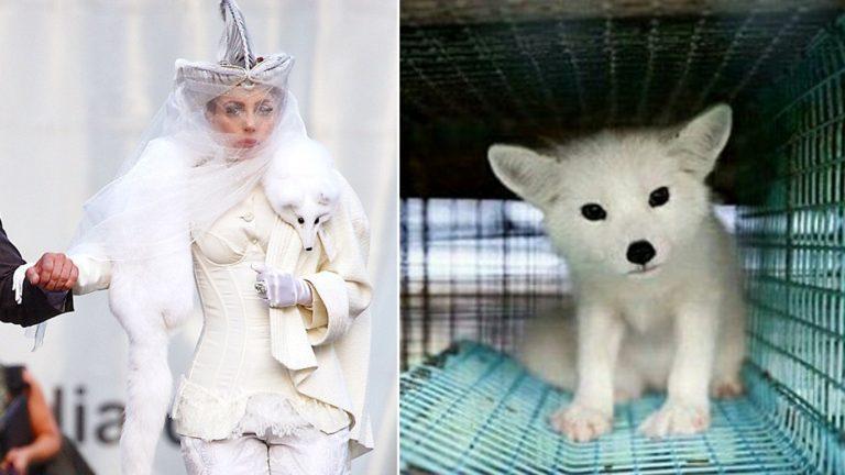 ליידי גאגא: אופנה קטלנית