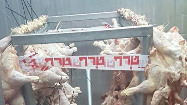 אור יהודה: שוטרים פשטו על משחטה והשמידו עשרות קילוגרמים של עופות