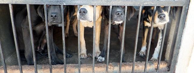 איציק שמולי: סוף לתופעת הסחר בגורים