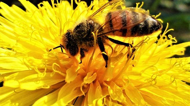דבורים רובוטיות אוטונומיות - פטנט
