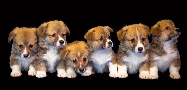 קדימה-צורן: כלבים הוחזקו במצב מחפיר בתוך מכולות