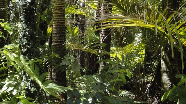 יערות הגשם של אגן האמזונס עומדים בפני נקודת מפנה בלתי הפיכה