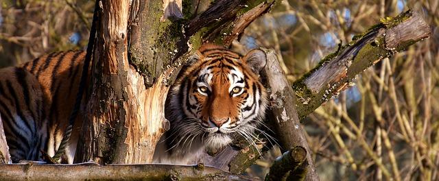 להסתכל להם בעיניים: בעלי החיים שנמצאים בסכנת הכחדה מיידית