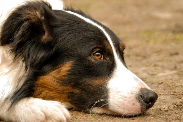 משרד החקלאות: כתב אישום נגד צעיר שתועד בועט בכלבתו ומטיח את ראשה ברצפה