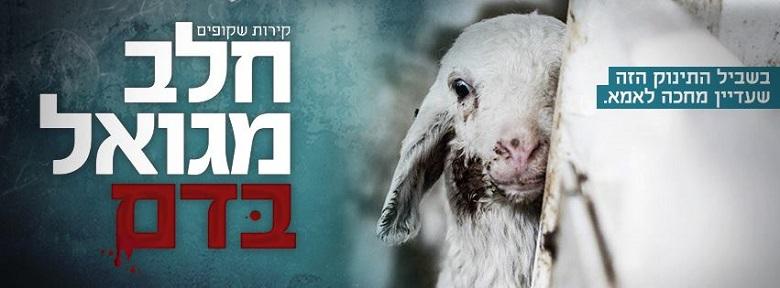 קמפיין שבועות נגד תעשיית החלב