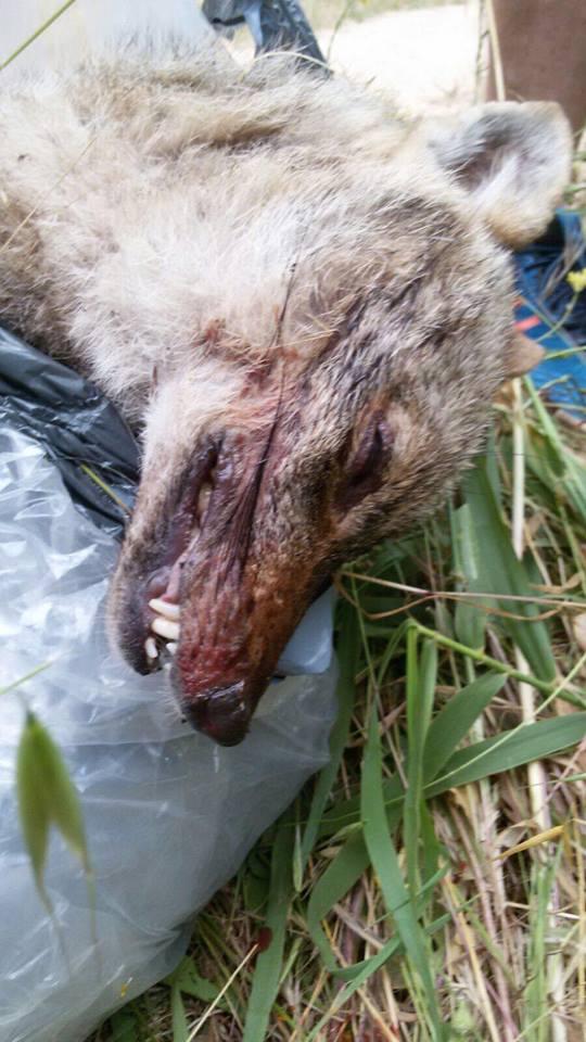 כלבלבת: הגורם לתמותת בעלי חיים בפארק הירקון