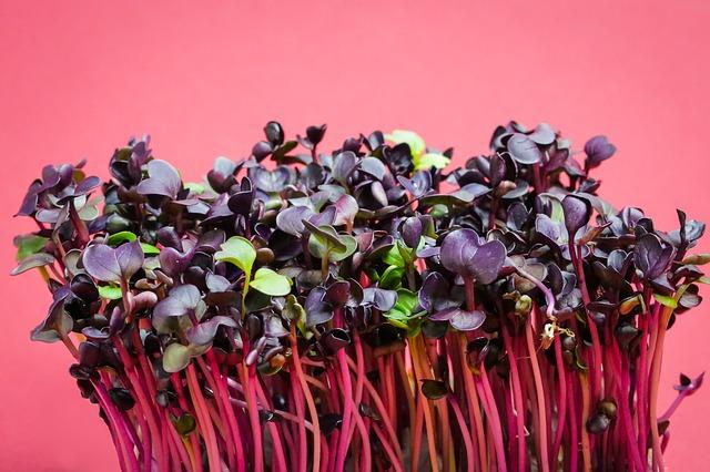 פריצת דרך: מדענים גילו דרך חדשה להשיג B12 דרך צמחים