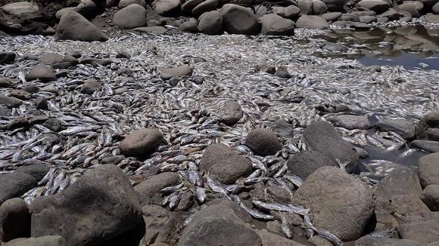 כורדיסטן: משבר מים בעקבות חסימת נהר על ידי איראן