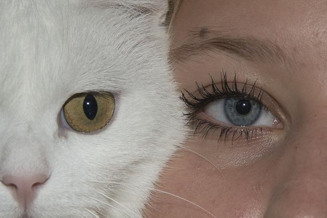 יקי שגיא: פסיכולוגים, התנגדו לטיפול באמצעות בעלי חיים