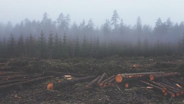 תעשיית הבשר היא הגורם העיקרי לשיאים חדשים של כריתת יערות