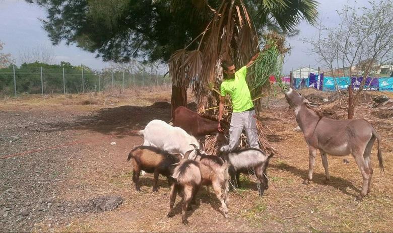 החווה של יוסי פותחת את שעריה לביקורים