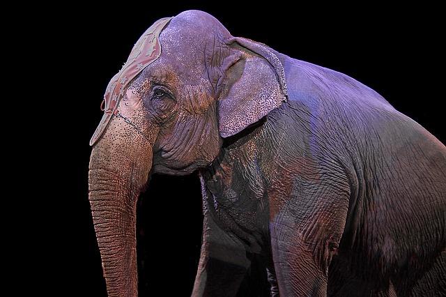 גרמניה: שלושה פילים נבהלו ודהרו לתוך הקהל במהלך מופע קרקס