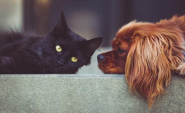 עשרה כלבים ועשרה חתולים עלו לארץ מאוקראינה