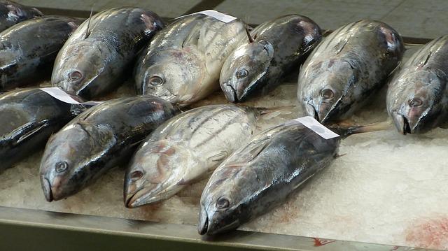 ספרד: נתפסו 45 טון טונה לא חוקית