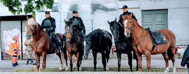 גלעד ארדן: חובה מוסרית להגן על בעלי החיים שבשירות המדינה
