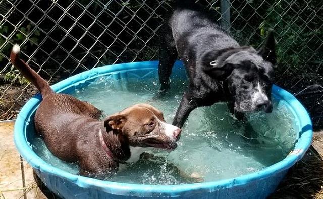 פלורנס: יותר מ-120 בעלי חיים הוצלו מהסגר שהוצף