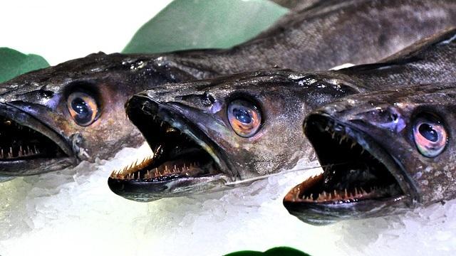 משרד החקלאות מאשר שימוש בפורמלין לטיפול בדגים
