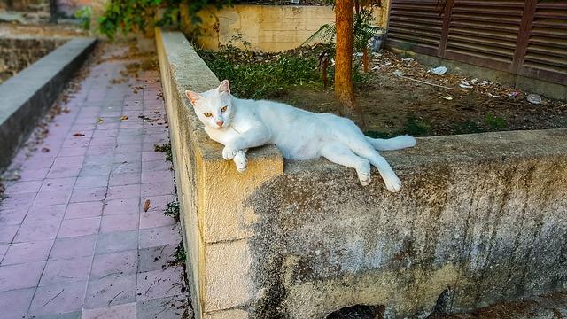 עיריית נתניה נגד עיקור וסירוס חתולים