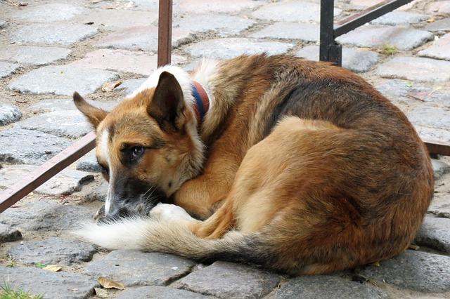 נורית קורן: אמשיך לפעול לצמצום תופעת הכלבים המשוטטים בישראל