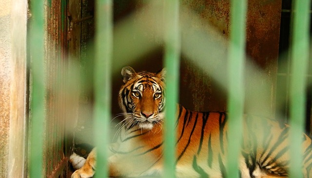 פורטוגל אוסרת על קרקסי חיות בר
