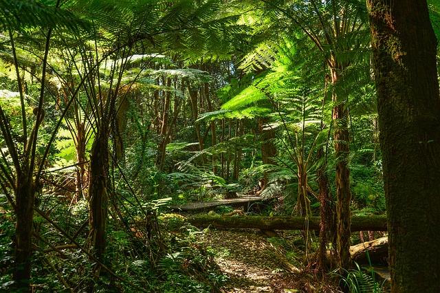 דבר ראשון: 7,900 קילומטרים רבועים של יערות נכרתו בברזיל בשנה האחרונה