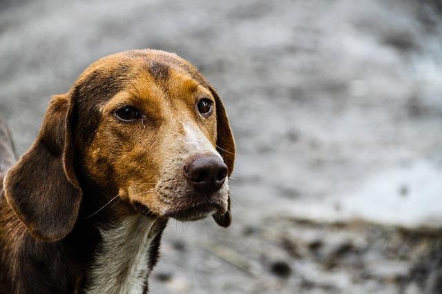 מצרים תייצא 4,100 כלבים וחתולים למאכל
