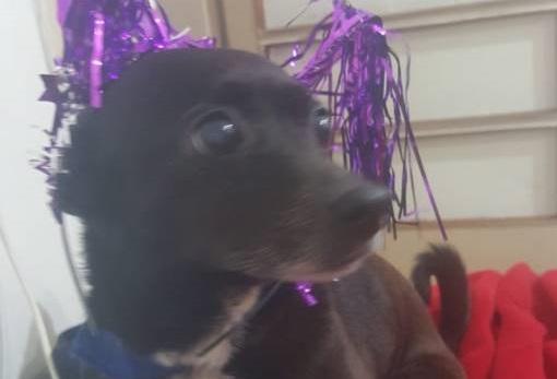 בת ים: מחלקת התברואה טמנה כלבה שנדרסה באתר בנייה ללא ידיעת הבעלים