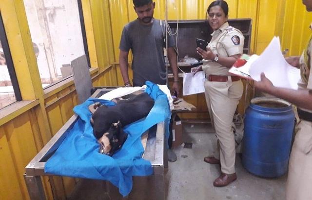 מומבאי: כלב נאנס לכאורה על ידי ארבעה גברים ומת