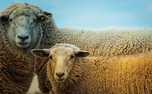 בית הנבחרים של בריסל מכיר בבעלי חיים כבעלי תודעה