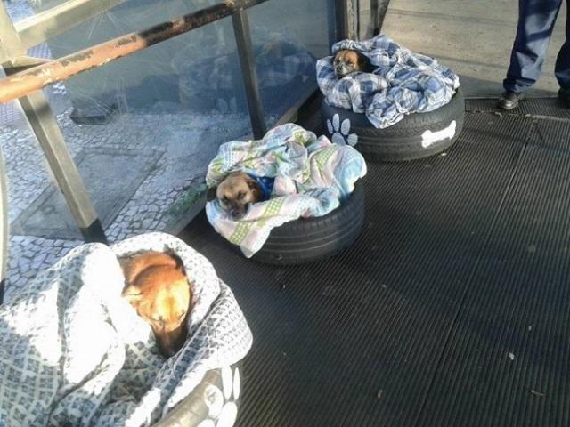 תחנת אוטובוסים מרכזית בברזיל פותחת את שעריה לכלבים חסרי בית
