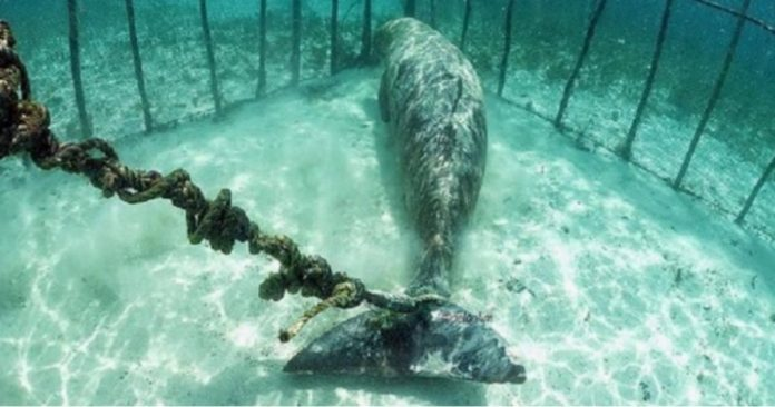 רוסיה: יותר ממאה לווייתנים כלואים במכלאות תת מימיות