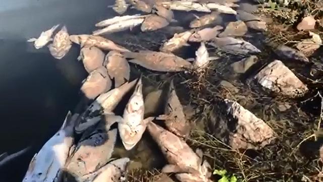 חמדיה: תיעוד תמותה המונית בבריכת הדגים
