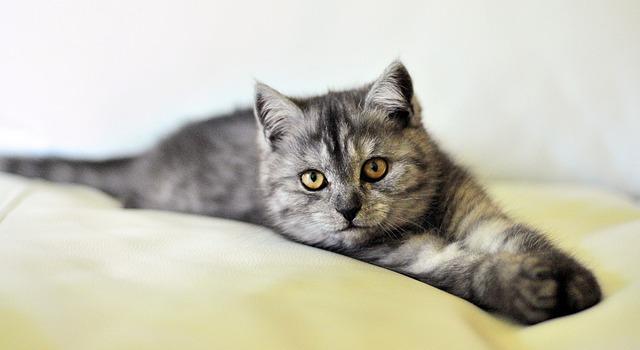 פסיקה: חתולי וכלבי גירגורים לא יומתו