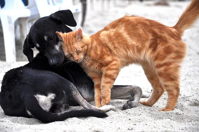 ארצות הברית אוסרת על שחיטת כלבים וחתולים למאכל
