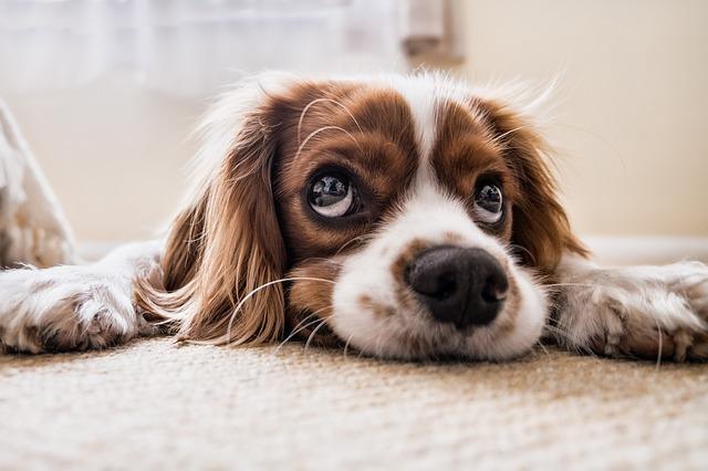 חיות מחמד: תרופה לאסתמה ולאלרגיות